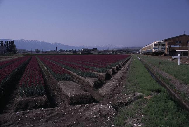 kiha58-fukuno2001-04.jpg